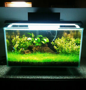 fluval Fish Tank London Ontario image 2