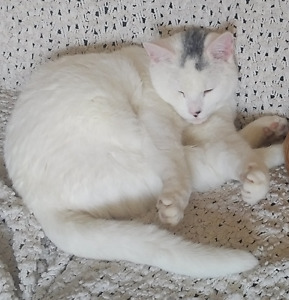 CHATTE BLANCHE 11 mois PERDUE