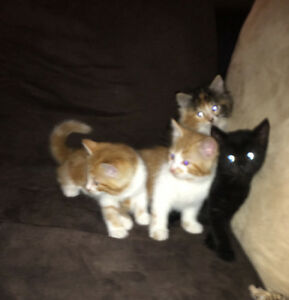 FREE!!! BEAUTIFUL KITTENS LOOKING FOR FOREVER HOMES