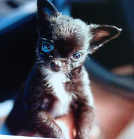 Do you,believe in Miracles...Small Miracle rescue does
