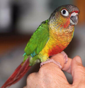 ❤★*FriiendlyConures with cage★❤