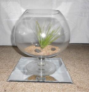 Unique Fish Bowl / Terrarium