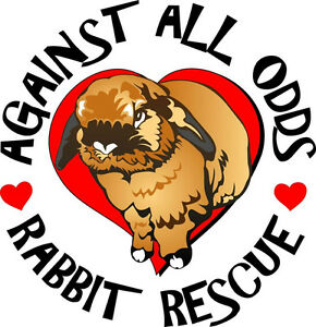 Against All Odds Rabbit Rescue find your new furbunny