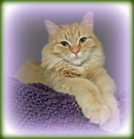 "=^..^=  WHISKER  RESCUE  SPECIAL =^..^=  "" PEKOE """