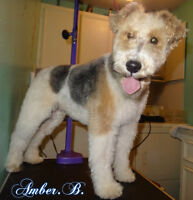 Dog Grooming In N.W Available today