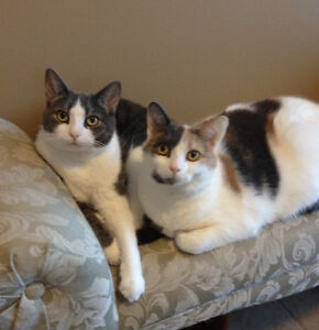 4 year female cats (sisters)