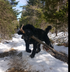 Dog Walker and Sitter in Cole Harbour