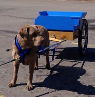 Red Dog Training - Dog Carting - NEW DATE & TIME