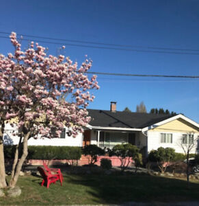 $2800 5 Bed 3 Bath Richmond Home for Rent! Move in Nov. 1st