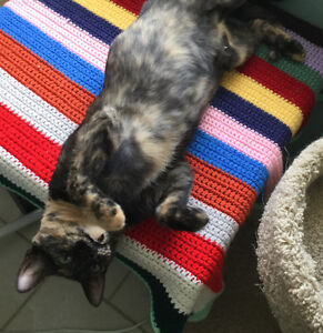 """Female young Tortie """"OCTORIA"""" London Ontario image 4"""