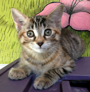 Really friendly rescued kitten 10wks - already spayed/vacc/etc.