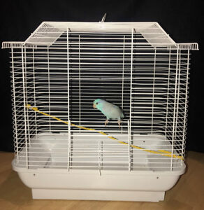 Small White Bird Cage