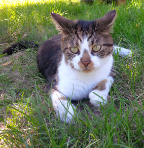 Very Friendly  FIV+ Neutered Male Cat in Need of Indoor Home