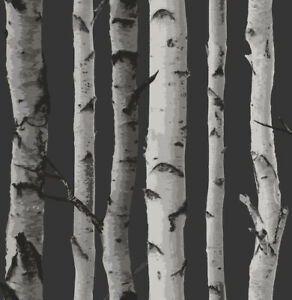 Premium Birch Tree Wallpaper, Unopened and New