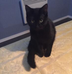 Chat femelle à Donner!