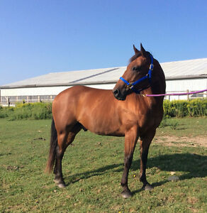 Horses for Sale, Horse Training, and Farrier Services Available