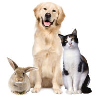 Quick Pet Owner Research Study - $10 Amazon Gift Card