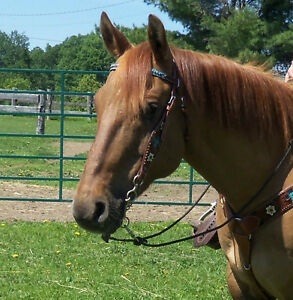 Barrel horse/Trail Horse available for ON FARM lease