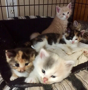 Kittens Looking for forever Homes!