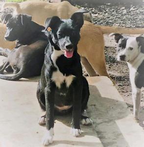 Niagara Dog Rescue - Petunia is an Awesome Puppy!