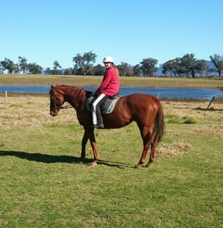 Tbred mare Gloucester Gloucester Area Preview