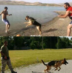 Akc9 Dog training