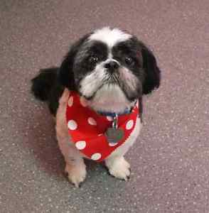 SATURDAY PET GROOMING appts available