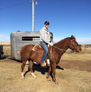Updated! For immediate sale! 5 year old sorrel mare 'Lucy'