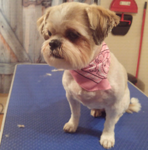 Dog grooming find or advertise pet animal services in edmonton dog grooming with care solutioingenieria Choice Image