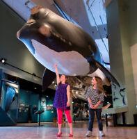 New Brunswick Museum Free Admission Days