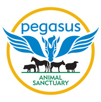 ANIMAL SANCTUARY FARM VOLUNTEERS WANTED 4  A LIFE CHANGING TIME