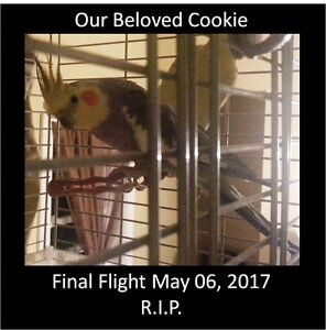 Does somebody want to give a Cockatiel a good home?