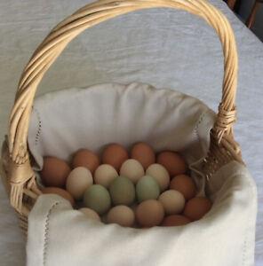 Rocking Horse Farm Eggs