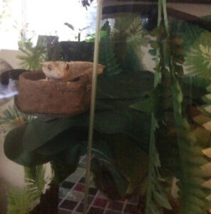 Rehoming crested gecko