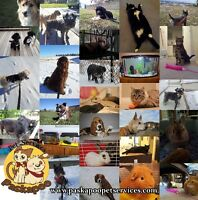 Professional and Insured Pet Sitting Services (NW, NE, Bearspaw)