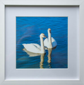 Photo/Art 'two Swans'