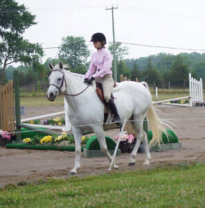 School horse or great first show horse