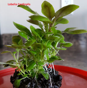 Live Aquarium Plants 04/14/19 *update*