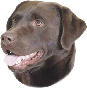 2x Aufkleber -   Labrador braun