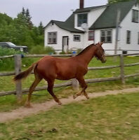 REGISTERED YEARLING FOR TRADE