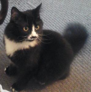 FREE  ....Female    7 MONTH  OLD  CAT ..  indoor   cat