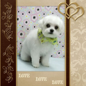 Pet grooming find or advertise pet animal services in aa pet spa professional grooming solutioingenieria Gallery