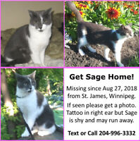 Please help! If you see this cat..