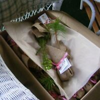 Tree Seedlings for Weddings, Earth Day, Birthdays, Promotions
