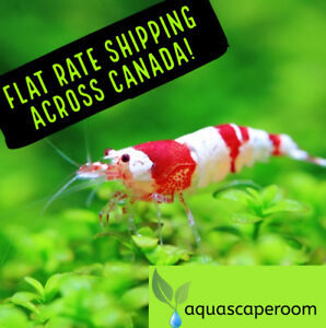Looking Online for Live, Quality Aquarium Plants?