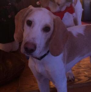 OVLPN - Lost dog in Cloyne