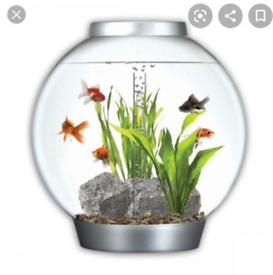 Tropical Bio Orb aquarium