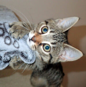 Rescued Cats & Kittens - Adopt & Save a Life!