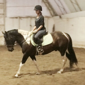 Outstanding 6 yr. old  Paint Gelding For Sale