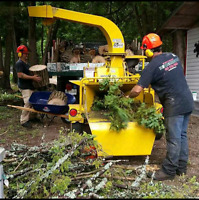 ** THE TREE REMOVAL SPECIALIST...SAVE 40% OFF**